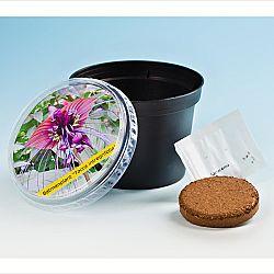 Magnet 3Pagen Netopieria kvetina