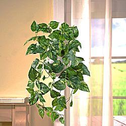 Magnet 3Pagen Previslá rastlina
